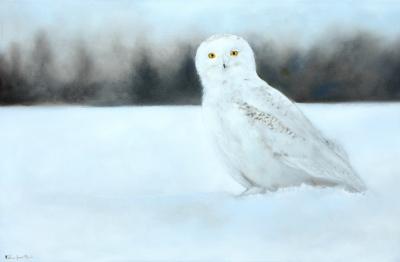 Harfand des neiges @ Gilles Jean Marie